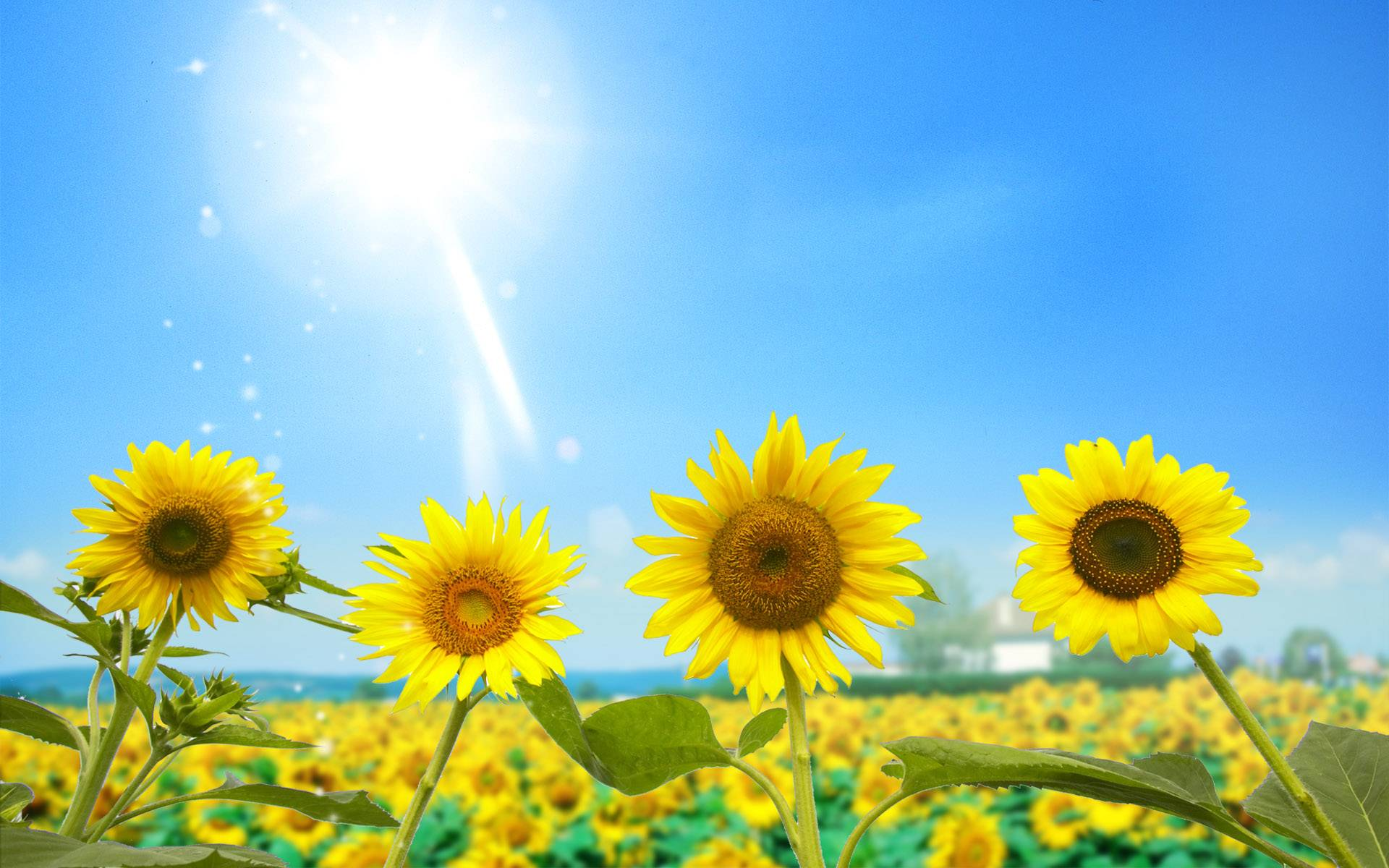172746 gorgeous flower under sunlight wallpaper hd one light community 1920 1200 in 172746 gorgeous flower under sunlight wallpaper hd voltagebd Gallery